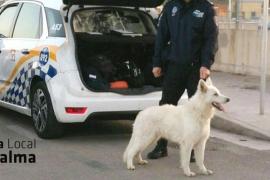 La policía recoge a un perro perdido cerca del polideportivo Germans Escalas de Palma
