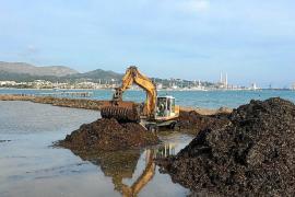La UIB propone transformar el inicio de la playa de Alcúdia en un gran 'lago de mar'