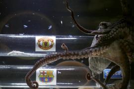 El pulpo Iker da como ganador al Manchester United