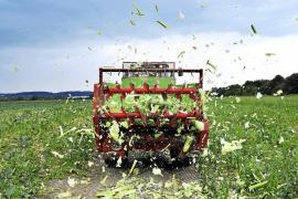 Exteriores se queja ante la UE de que se culpe del brote infeccioso a pepinos españoles