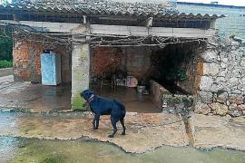 Polémica en Facebook por la sanción de la Policía Local al dueño de un perro en sa Pobla