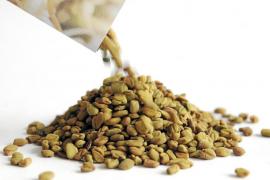 La Unión Europea veta la importación de semillas procedentes de Egipto