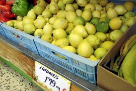 Los cítricos de Mallorca, amenazados por la oferta más barata de la Península
