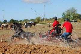 Arte & Equitación