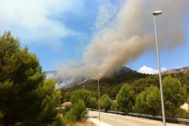 Arden 48 hectáreas más de pinar en Artà y Peguera