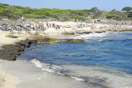 Cala Agulla será regenerada en septiembre con arena proveniente de la construcción