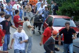 Animanaturalis protestará contra la 'Baixada del Bou' de Fornalutx