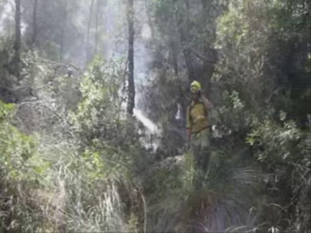 Controlado un incendio forestal en Na Burguesa y otro en Petra