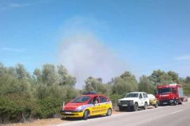 El Seprona investiga si seis incendios declarados este año en Mallorca han sido provocados