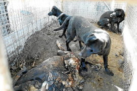 Perros enjaulados
