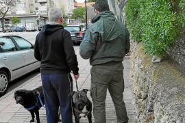 Inspeccionados en Calvià 476 perros en 18 días para ver si cumplen con las ordenanzas