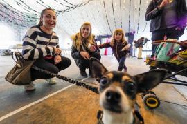 Sant Antoni acoge la tercera edición del festival 'We love animals'