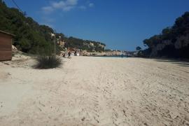 El GOB denuncia la destrucción de una duna en Cala Llombards