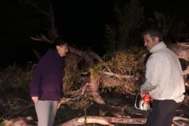 La caída de un pino obliga a cortar la carretera de Estellencs a Andratx
