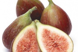 Taller 'Figues, figueres i canyissos'