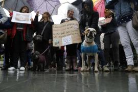 Miles de firmas reclaman una ley de maltrato cero contra los animales