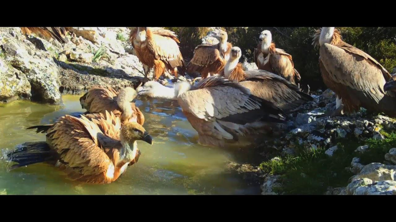'El archipiélago indómito', la primera película documental de historia natural filmada en Baleares