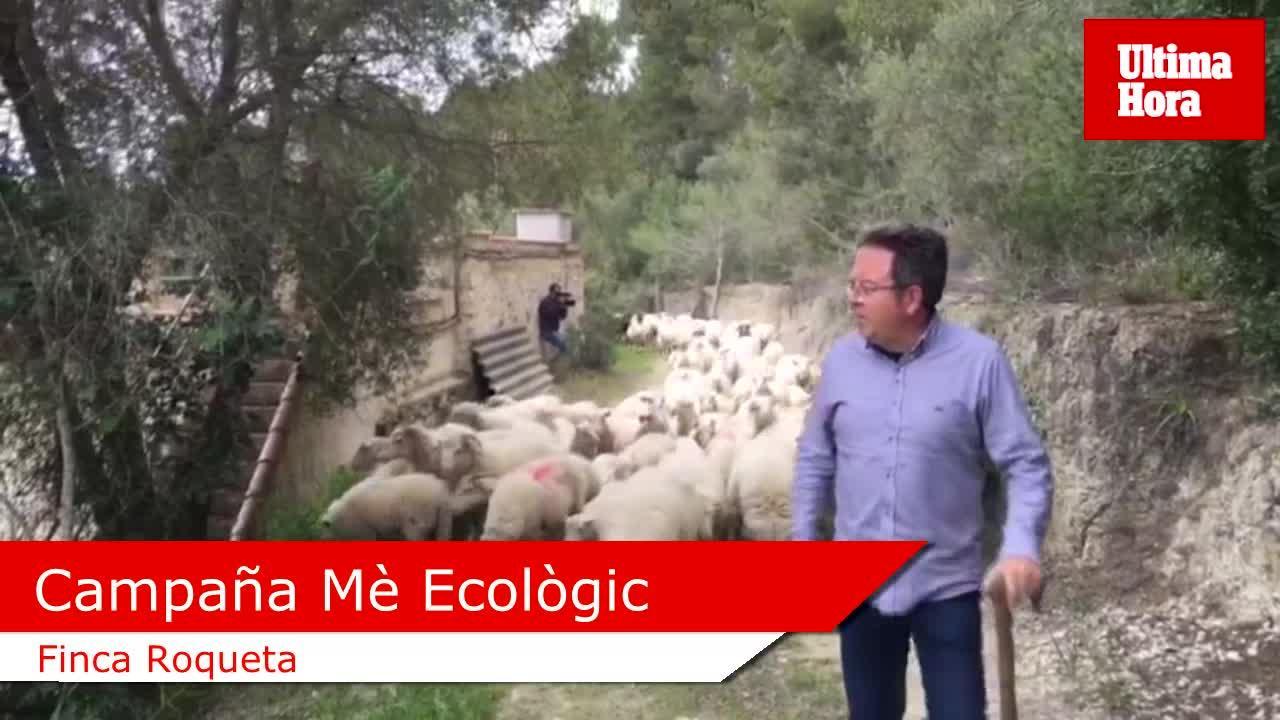 Crece la demanda de cordero ecológico con respecto a la anterior campaña de Pascua
