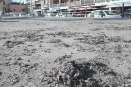 Toallitas húmedas, del inodoro al paseo y la playa del Portitxol