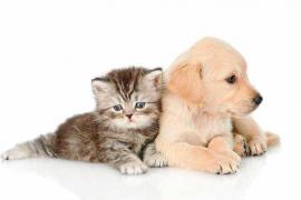 Diez reglas antes de adquirir una mascota
