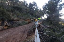 Operarios retiran los pinos caídos en la carretera de es Capdellà a Galilea