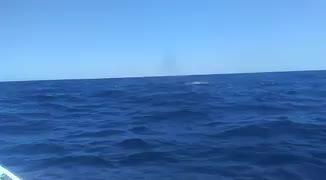 Un pescador graba a una ballena al norte de Ibiza
