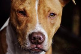 Un perro suelto y sin bozal muerde a un bebé en Madrid