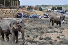 Fallece un elefante y otros dos resultan heridos por el vuelco de un camión en Albacete