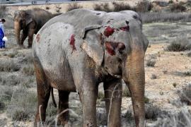 PACMA logra 130.000 firmas en contra de la utilización de animales en circos