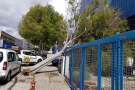 Mallorca registra una decena de incidentes por el viento y la lluvia
