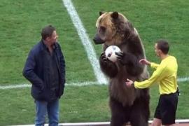 El saque de honor de un oso en el fútbol ruso que asombra al mundo