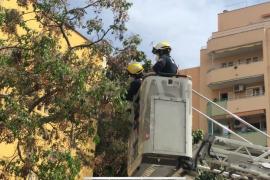 Los bomberos talan una veintena de árboles en riesgo de caída en Camp Redó