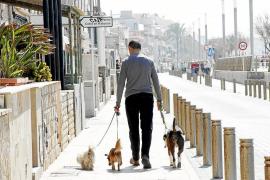 La multa mínima por los excrementos de perros pasará de 300 a 750 euros