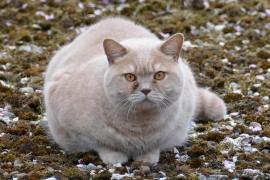 Detenida una joven acusada de maltrato animal por matar a un gato al meterlo en la lavadora
