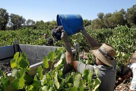 El instituto de Felanitx impartirá el primer grado superior de Vitivinicultura de Baleares