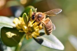 Ingresado grave un ciclista con varias picaduras de abeja