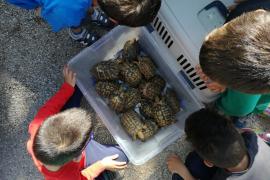 Liberadas 150 tortugas y una pareja de halcones en el parque natural de Mondragó