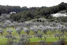 El Consell d'Eivissa limita el alquiler turístico a 20.500 plazas