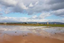MÉS reclama al Gobierno 6,2 millones por los daños del temporal de 2016