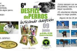 Nuevo desfile de perros que buscan una familia