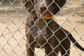 Veinticinco perros de Son Reus buscan una nueva oportunidad
