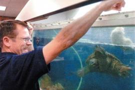 Denuncian a un biólogo por alimentar a una tortuga con un cachorro de perro moribundo