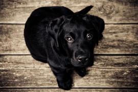 Un cachorro de perro al que amputaron las patas se convierte en un símbolo