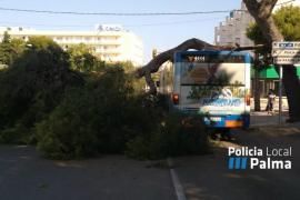 Una rama de pino cae sobre un autobús de la EMT