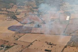 Un incendio quema unas 7 hectáreas de suelo agrícola en Manacor