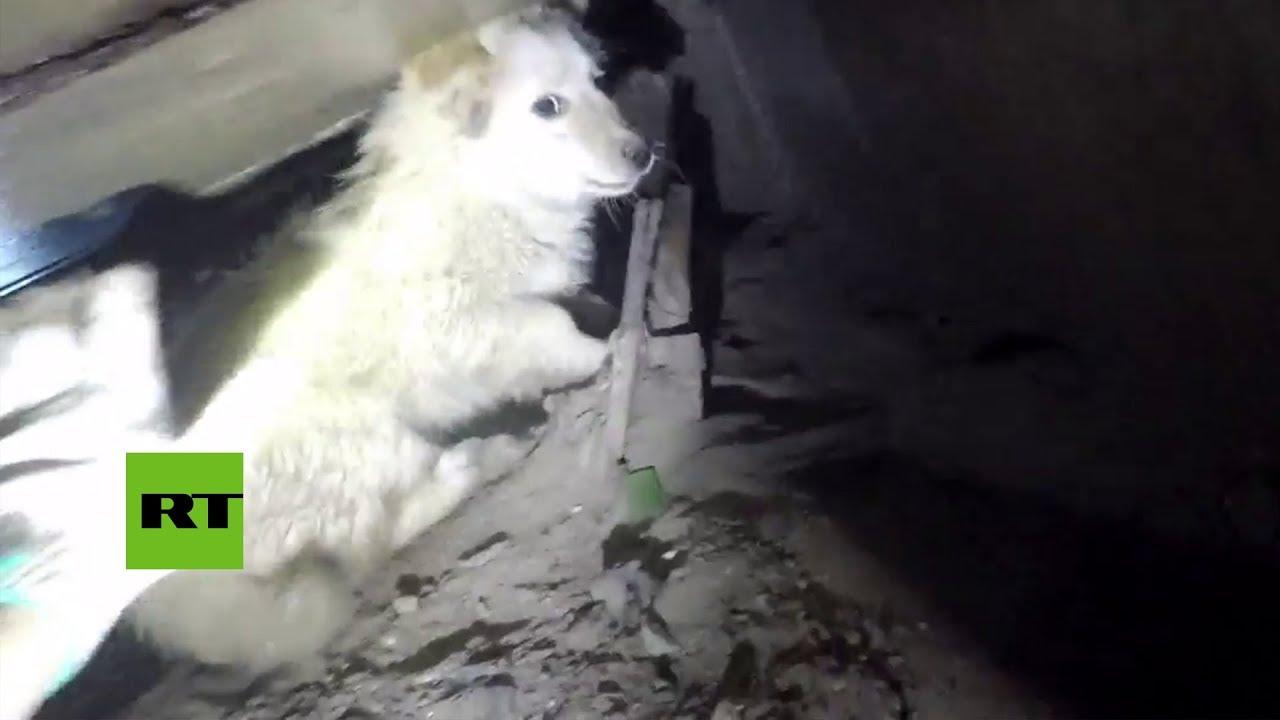 Rescatan a un cachorro que llevaba tres meses atrapado en una alcantarilla