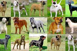 Sanciones de hasta 15.000 euros para los dueños de perros peligrosos sin licencia