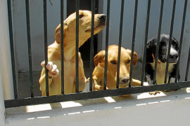 Son Reus alcanza el 'sacrificio cero' de perros con solo una eutanasia este año