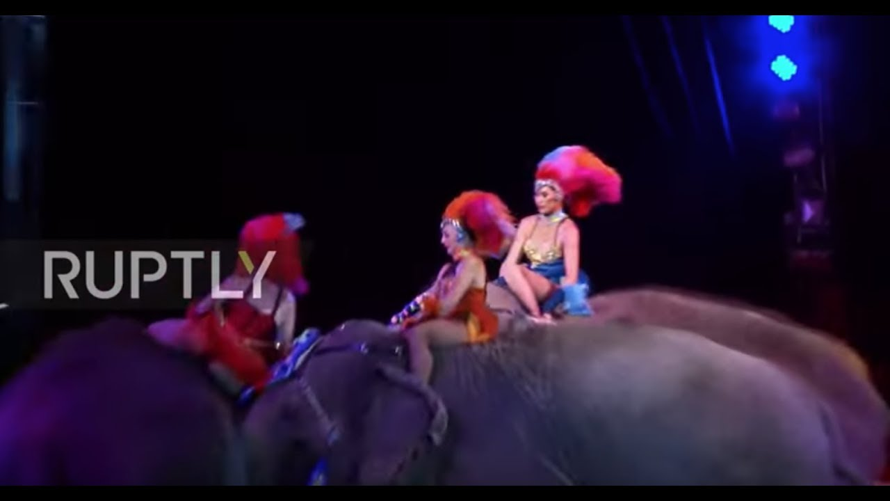 Un elefante cae sobre el público en un circo de Alemania