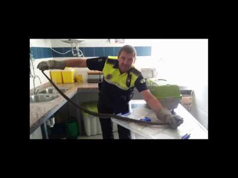 Capturan una culebra bastarda enroscada en el carrito de un bebé en Málaga